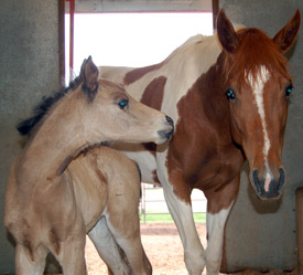 Twin foals born year after mother's death (PS IM USING THESE PICS) 137b