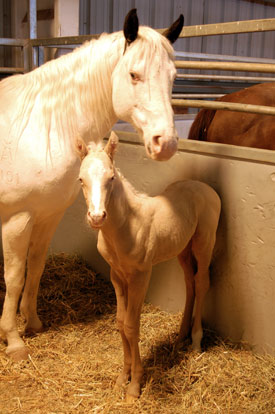 Twin foals born year after mother's death (PS IM USING THESE PICS) 137c