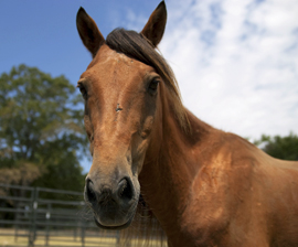 Fabio at the Doris Day Horse Rescue and Adoption Center in Texas.