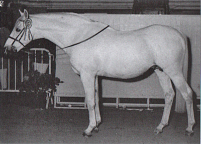 Bwlch Valentino at the age of 18, ready for his appearance at the Personality Parade at the Horse of the Year Show in 1968.