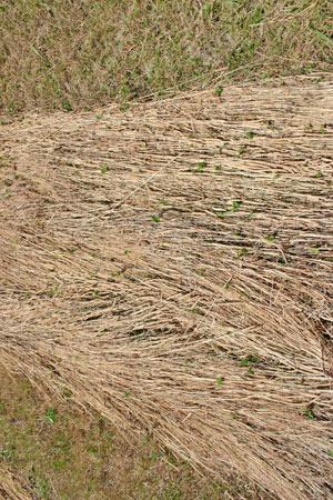 hay-drought