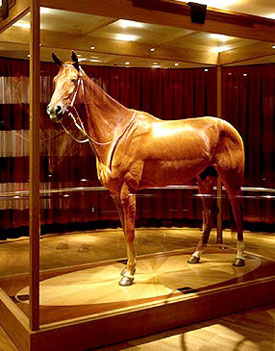 Phar Lap at the Melbourne Museum.