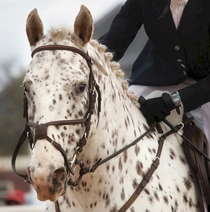 Fort Worth will host the Appaloosa nationals for the next five years.