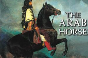 arab-horse-feat
