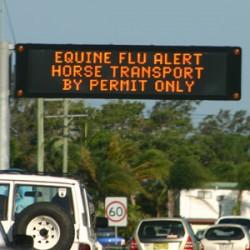 Australia's equine flu eradication a triumph for vet medicine – review