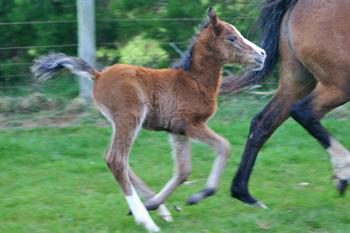 foal-vaccine