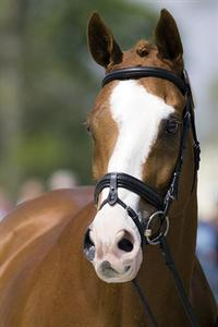 Neville Bardos, who survived a stable fire and returned to top-level competition. He was named joint 2011 US Horse of the Year.