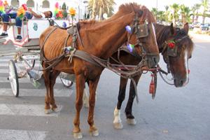 tunisia-feat