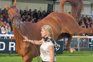 burghley-trot-feat