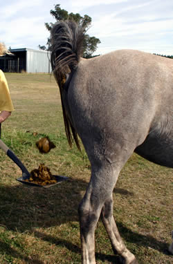 Horse Manure An Easy Guide To Composting Features