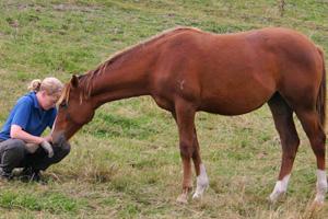 Depression in horses