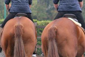 Saddle-slip-feat