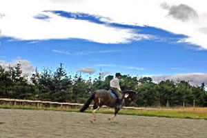 Building a horse-riding arena: Thinking outside the rectangle