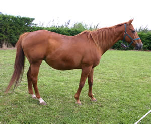 Normal signs of behaviour before and including foaling in mares
