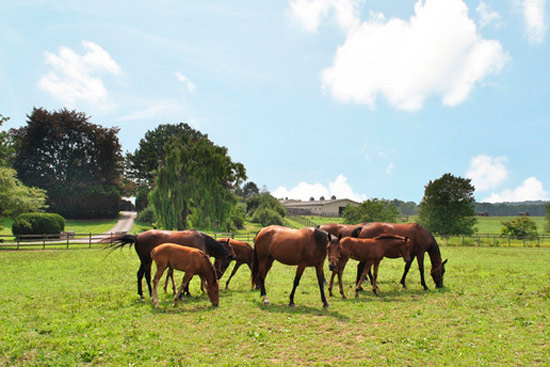 About 175 horses go with the four properties being sold as one.