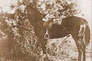 war-horse-feat