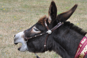 donkey-feat