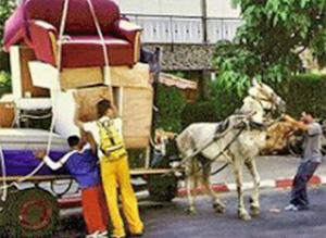 israel-carriage-ban