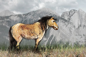 Are North America's wild horses native?