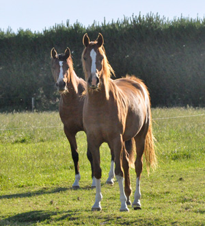 Prevention and dietary adjustment show promise in fending off joint pain in young horses.