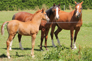 Electric fencing for dummies - Features- Horsetalk co nz