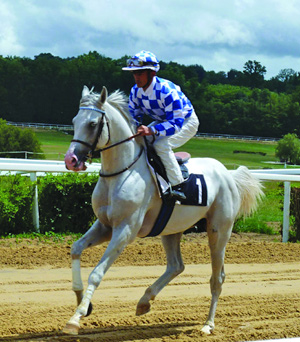 Izz Al-Khail, cantering to the starting gates at the Pompadour Racecource in 2011, where he won of 1700m. He has very distinctive eyes – one blue and one brown.