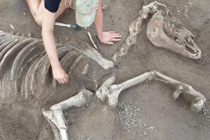 historic-skeleton-virginia-feat