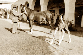 Will Kellogg with Fasal and 12-day-old Pep, the future trick horse, in the original Kellogg House Stables in 1929.
