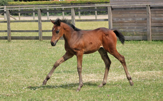 Fewer thoroughbred foals are expected to be born in the US in the coming season.