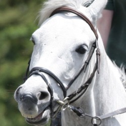 "Study flags concern over ""relentless pressure"" from tight nosebands"