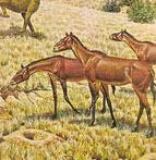 The Packsaddle Wildlife Management Area.