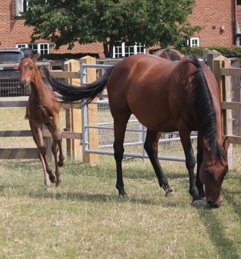 mare-foal-tb-stock