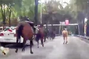 police-horse-stampede