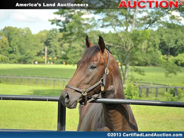 Geauga-county-horse-property