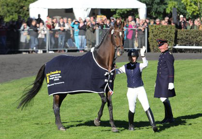 Lauries Crusador at the State Stud's recent Stallion Parade.  © S. Repentance