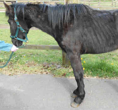 Sapphire-World-Horse-Welfare-web-featured