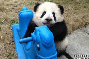 panda-feat