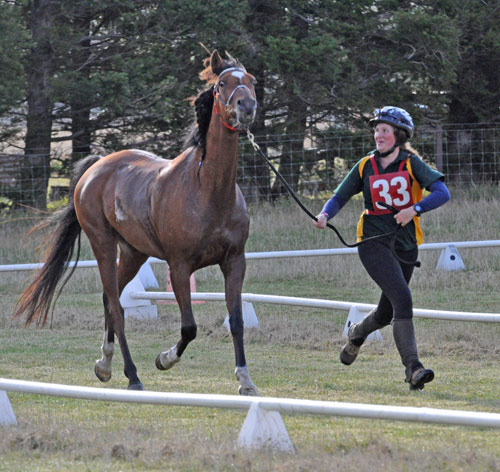 Australian rider Jessica Fuhlbohm and Kilarney Fire trot up for the vets during a check for the CEI 1* YR 100km Championship.