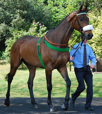 2011 Grand National winner Ballabriggs is among 13 previous winners being paraded at Aintree.