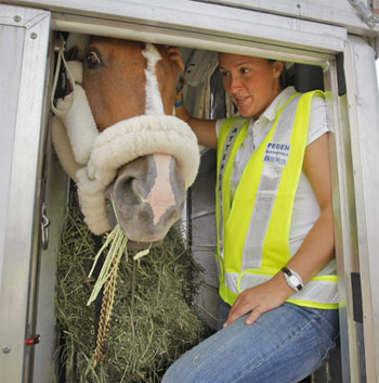 Horses being flown to Brazil for the Olympic Games will be accompanied by professional flying grooms and veterinarians.