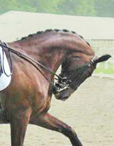 The researchers say that, regardless of the competition level, horses exhibited more conflict behaviours the more the head was kept behind the vertical. [File image]