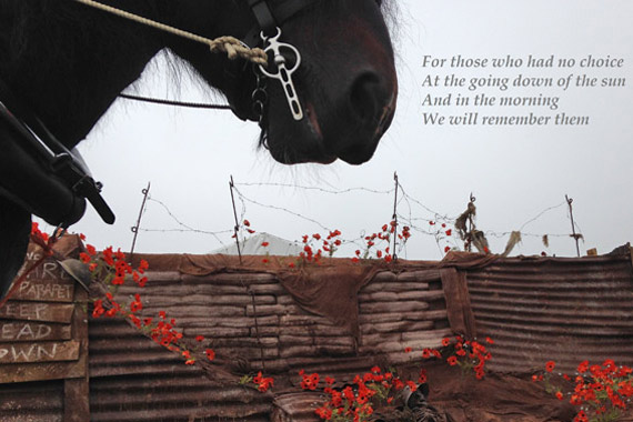 war-horse-poppies-300