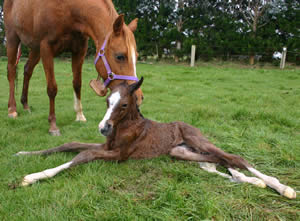 foal-newborn
