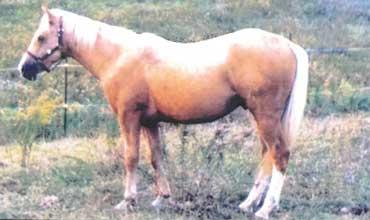 missing-horse-canada-2