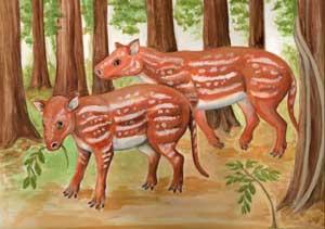 horse-ancestor