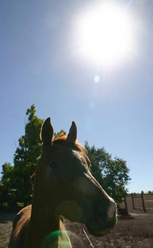 drought-4-sun