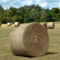 What the hay? Why hay storage is such a hot topic
