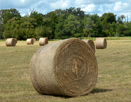 Care Is Needed When Storing Round Bales Of Hay
