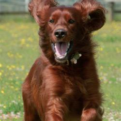dog-bhs-250