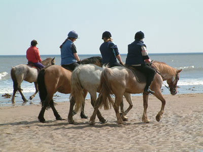Horse trekking in Scotland.